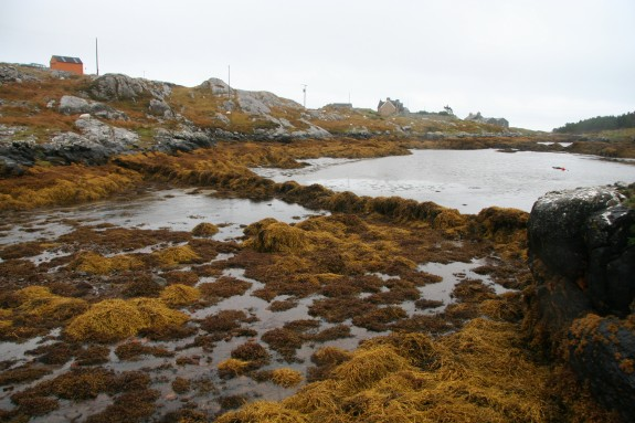 An intertidal fishtrap on South Harris. Marine resources exploitation has played an important role in coastal living.